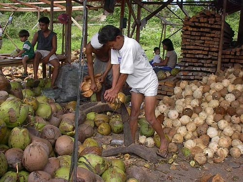 5.Philippines - Largest producer of coconuts